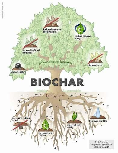 biochartree