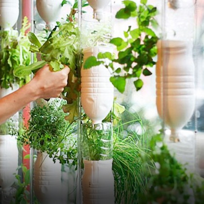 freedomfor_homepage_hydroponic_apartment_garden