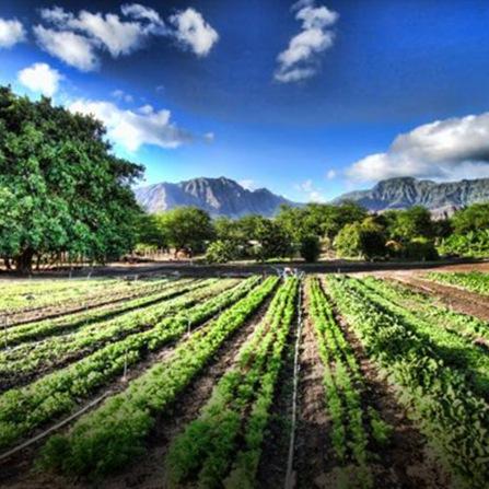 freedomfor_homepage_locacl-farming