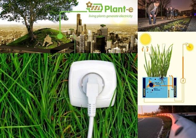 Plant-e+6-11-'14-001