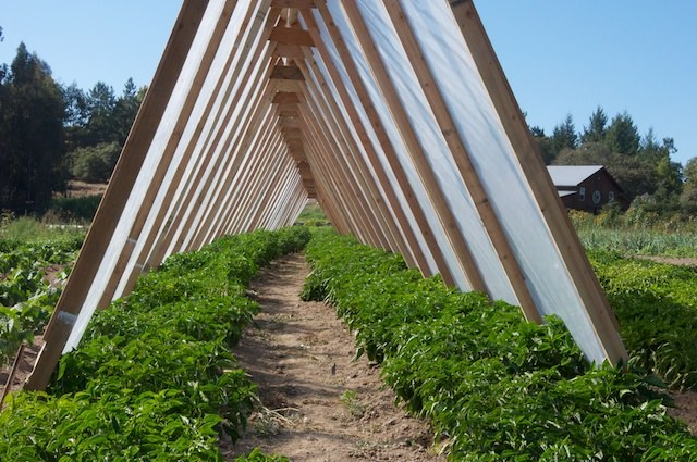 a-frame-greenhouse_built_at_french_garden_farm