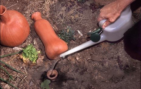 Curtis Smith, horticulture specialist with New Mexico State University's Cooperative Extension Service, fills a buried olla in his garden with water
